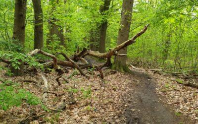 Twee dagen crossen door de bossen bij Nijmegen #trailrunning #N70